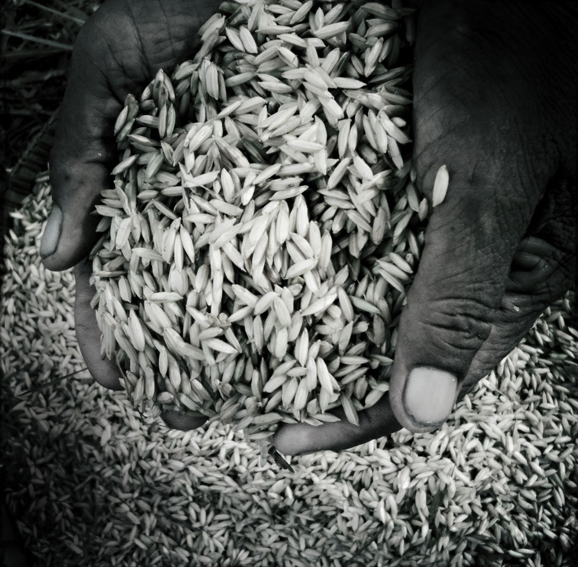Bali-Rice-for-web112
