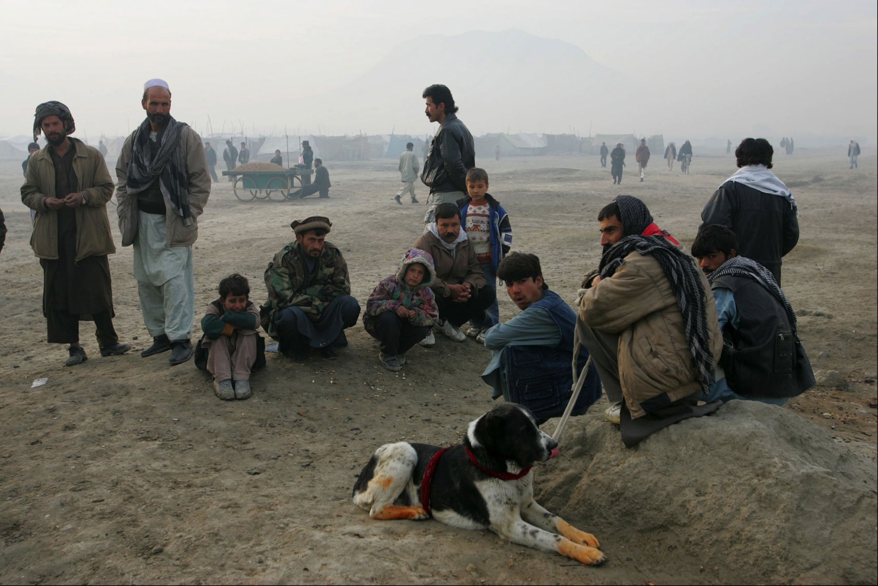 Dog-Fighting-Afghanistan002