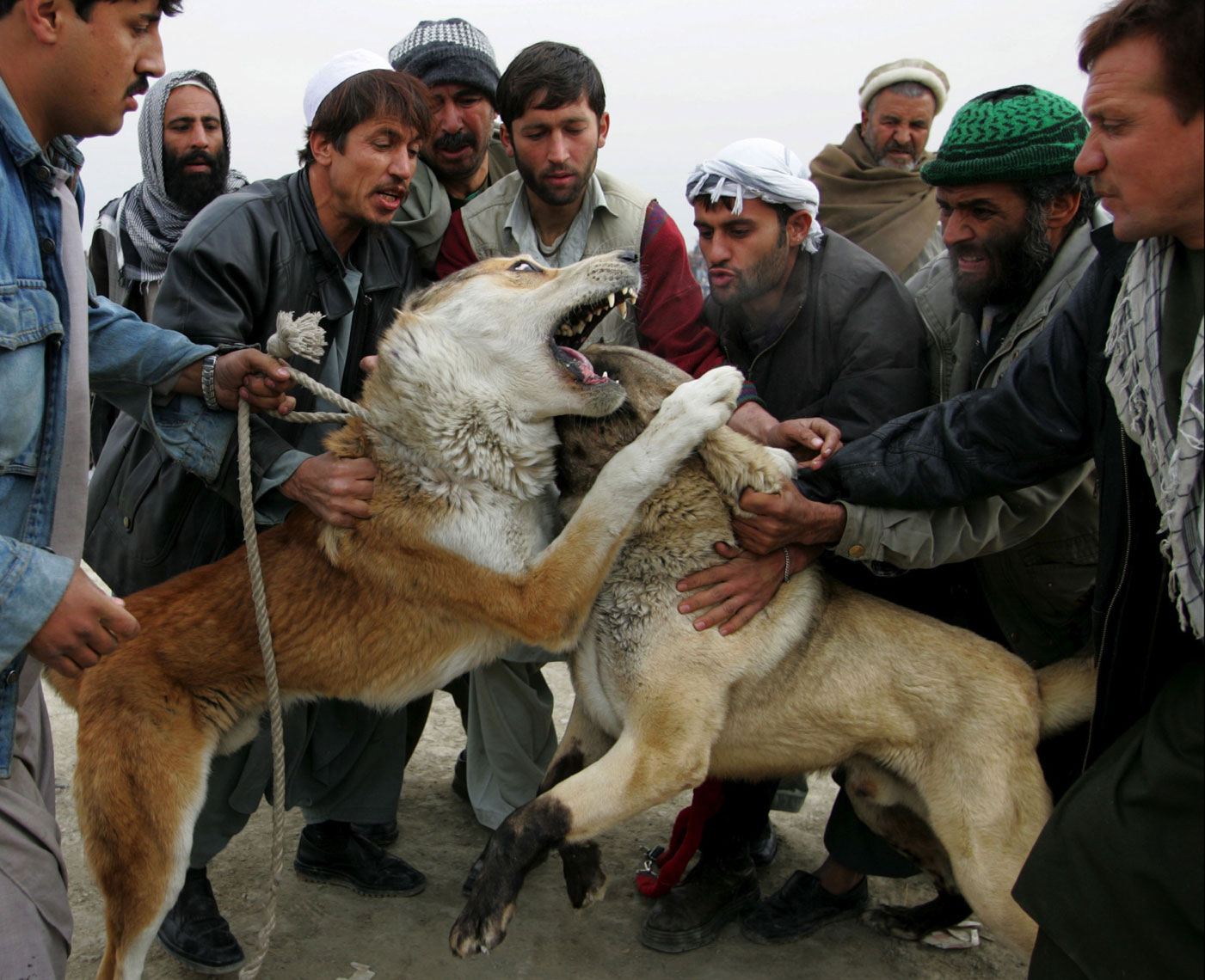 Dog-Fighting-Afghanistan005