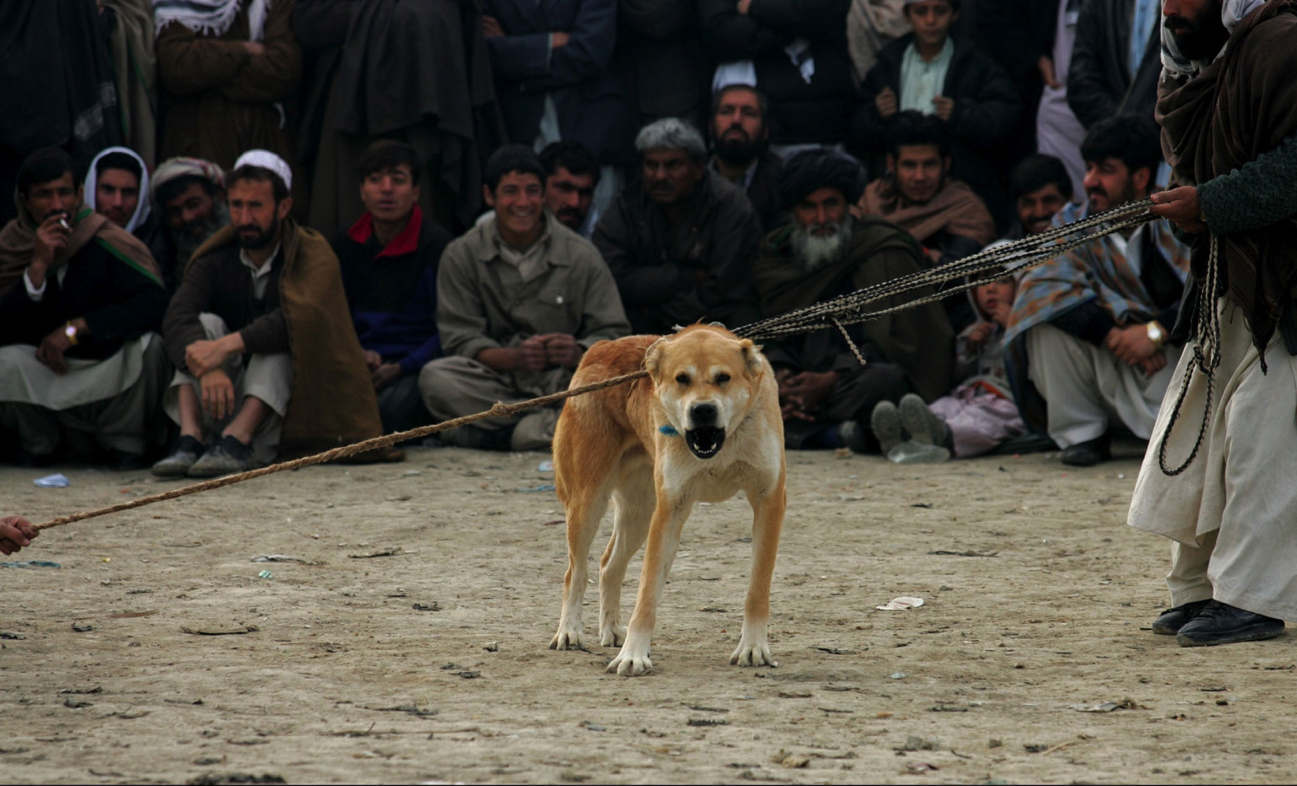 Dog-Fighting-Afghanistan007