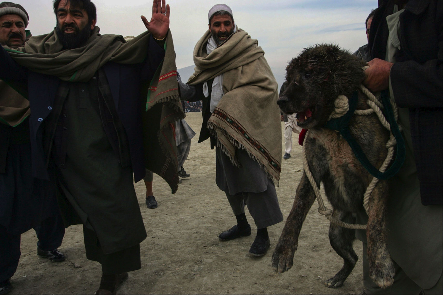 Dog-Fighting-Afghanistan009