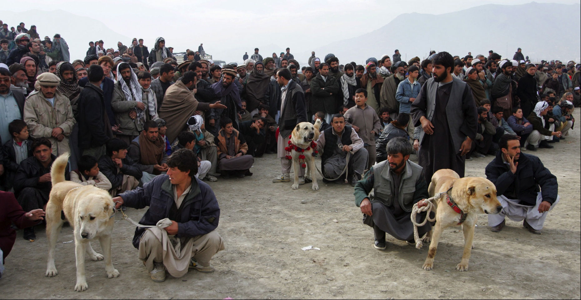 Dog-Fighting-Afghanistan010