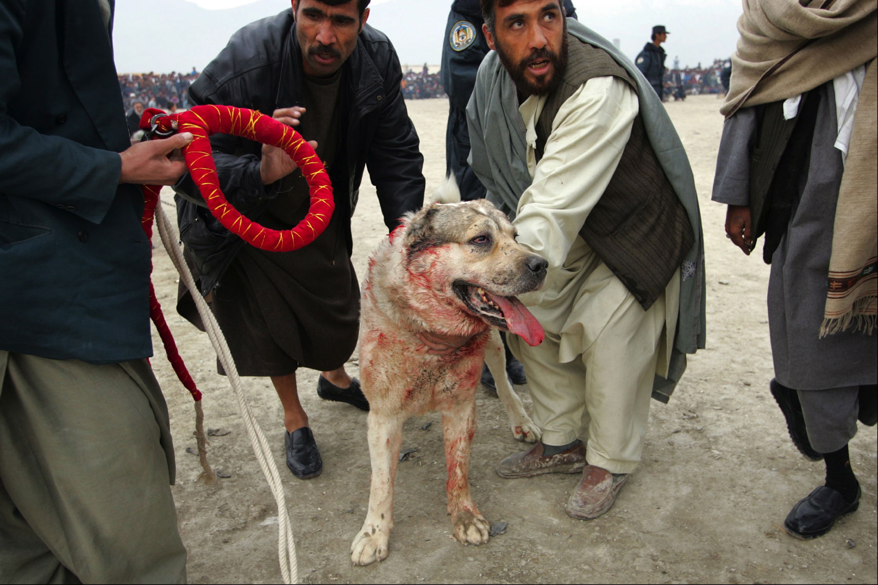 Dog-Fighting-Afghanistan014