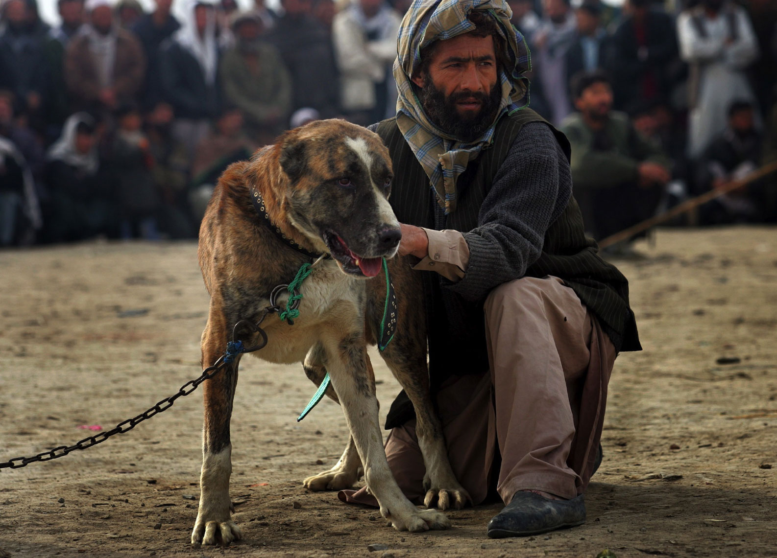 Dog-Fighting-Afghanistan027