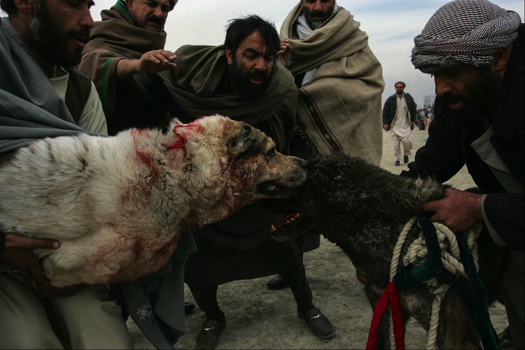 Dog-Fighting-Afghanistan028